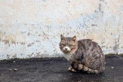 睡觉在雪下的无家可归的灰色猫 免版税库存照片