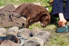 睡觉在他的男孩和一个温暖的营火旁边的一条非常疲乏的狗 库存照片