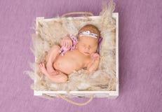 睡觉在紫罗兰色背景的箱子的赤裸婴孩 库存图片
