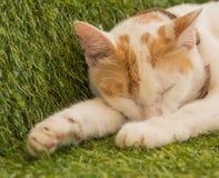 睡觉在绿色草皮,泰国的逗人喜爱的幼小猫 库存图片