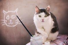 睡觉在concret墙壁背景的公猫 免版税图库摄影