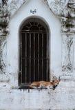 睡觉在stupa的狗 Kuthodaw塔 曼德勒地区 缅甸 库存图片