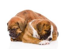睡觉小狗 在空白背景 免版税库存照片