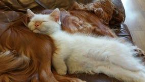 睡觉小猫和小狗 免版税库存图片