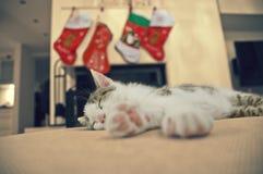 睡觉小猫,圣诞节时间 库存图片