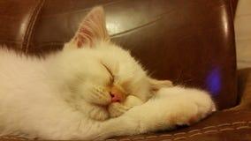 睡觉小猫 免版税库存图片