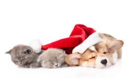 睡觉彭布罗克角威尔士小狗与圣诞老人帽子和两小猫的小狗 查出在白色 免版税库存图片