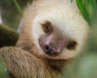 睡觉怠惰的画象在树的 免版税库存照片