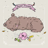 睡觉熊的图片 免版税库存照片