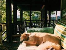 睡觉狗在夏天 免版税图库摄影