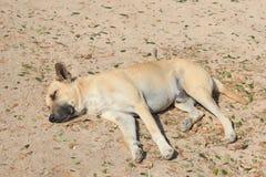 睡觉狗 库存图片