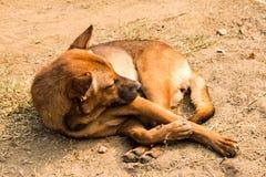 睡觉狗 图库摄影