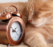 睡觉猫。 免版税库存图片