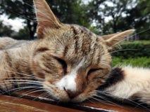 睡觉猫在上海中国 免版税库存照片
