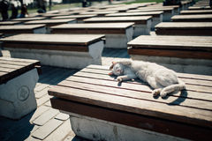 睡觉猫在伊斯坦布尔 库存照片