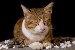 睡觉猫有黑背景 免版税库存图片