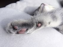 睡觉猫的爪子 图库摄影