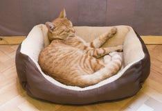 睡觉猫 库存图片