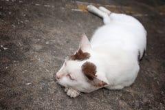睡觉猫 免版税库存照片