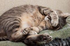 睡觉猫 库存照片