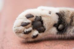 睡觉白色猫爪子 免版税库存照片