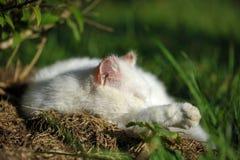 睡觉白色猫特写镜头  图库摄影