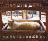 睡觉的橙色猫 库存照片