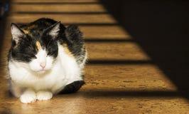 睡觉的猫在阳光下 免版税库存图片