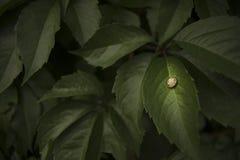 睡觉蜗牛 免版税库存照片
