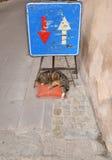 睡觉街道猫 库存照片