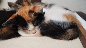 睡觉逗人喜爱的小猫 免版税库存图片