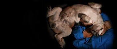 睡觉颠倒在枕头的愉快的狗 免版税库存照片