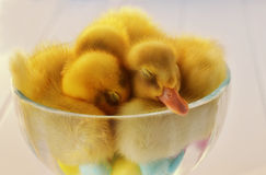 睡觉鸭子圣代冰淇淋 免版税图库摄影
