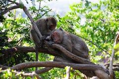 睡觉猴子 库存图片