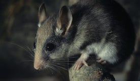 睡鼠庭院 免版税库存照片