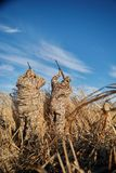 瞄准入与步枪的天空的两位水鸟猎人 免版税库存图片