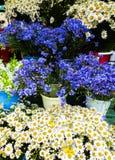矢车菊和春黄菊美丽的花在巨大的花束 免版税图库摄影