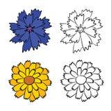 矢车菊和金盏草平的图画  库存图片