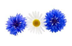 矢车菊草本或学士按钮花和春黄菊在whi 库存图片