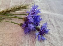 矢车菊,在亚麻布的大麦耳朵 免版税库存图片