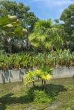 短和高棕榈树 免版税库存图片