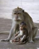 短尾猿和她的婴孩在猴子森林, Ubud里 免版税库存照片