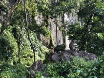 短尾猿坐一个分支在密林反对一个独特的垂直的岩石在一好日子 库存图片