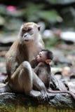 短尾猿猴子护理的年轻人 免版税库存图片