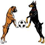 短毛猎犬和拳击手 库存例证