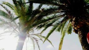 短的棕榈上面 库存图片