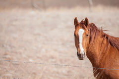 短距离冲刺的马在牧场地 库存照片