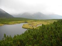 矮小的杉木和一个湖山的 免版税库存图片