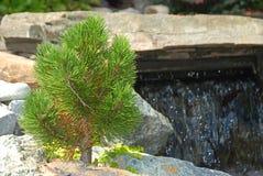矮小的杉木和瀑布 库存图片