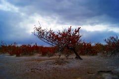 矮小的树埃利通湖俄罗斯10月 免版税库存照片
